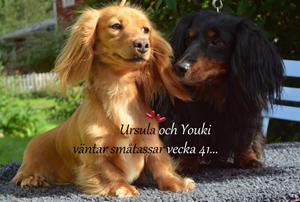 youkiochursula1