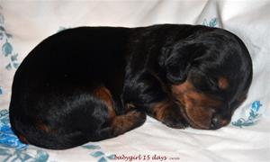 babygirl 15 days