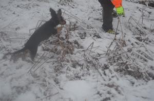 spårskogen 19 januari 2015 228
