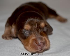 DORA 11 DAYS OLD