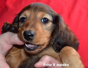 Fritz 8 v