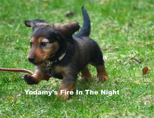 Yodamy's Fire In The Night_8