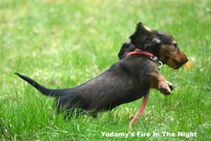 Yodamy's Fire In The Night_6