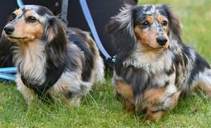 Agnes till vänster och Lillis till höger