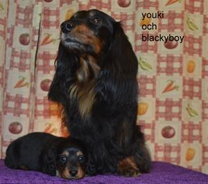 youki och blackyboy