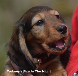 Yodamy's Fire In The Night_3