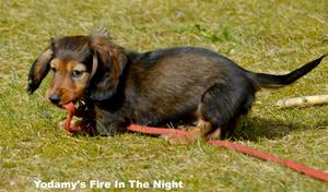 Yodamy's Fire In The Night