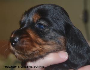 GRETHE-SOPHIE
