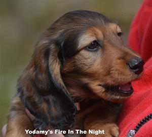 Yodamy's Fire In The Night_2