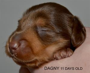 DAGNY 11 DAGAR