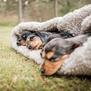 4 trötta småtroll