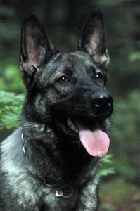 Gråmanns Cmilla en Tysk schäferhund ägare Janet Carlsson