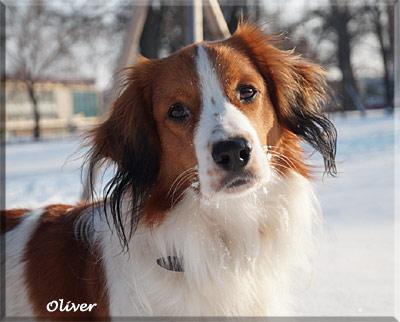 140211_Oliver