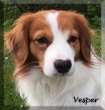 Vesper_4475