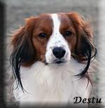 Destu_4298_