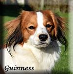 Guinness_0233