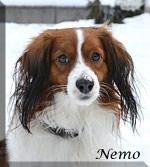 Nemo_0993_huv_l