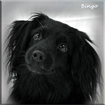 Bingo_lithuv_350653875569