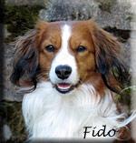 Fido_huv