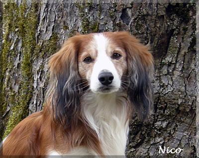 Nico_veteran 2012_6349