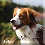 Solo_lit
