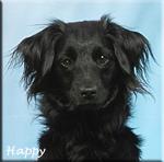 Happy_lithuv