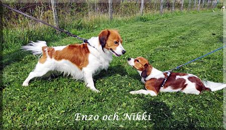 180825_125033_Enzo_nikki