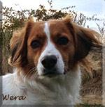 Wera_huv