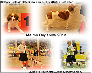 130329_Malmodogshow2013