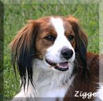 Zigge_12