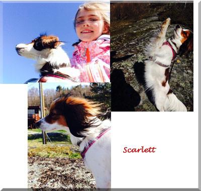 140522_scarlett