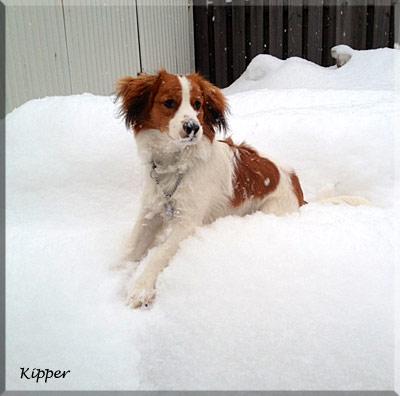 130321_kipper