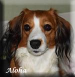 Aloha_3249huv