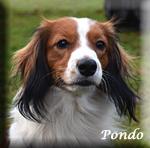 Pondo_1651