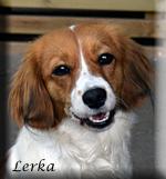 Lerka_0531_hud