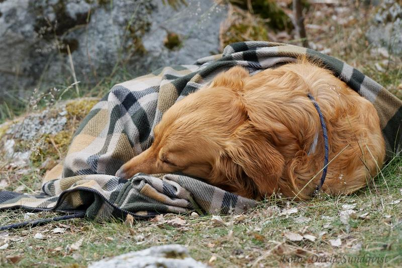 Odd sover