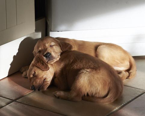 två sovande