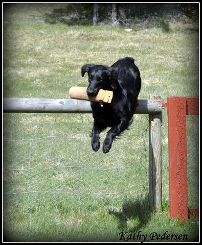 ¨valparna 5,5 v hopp björkåsen 014