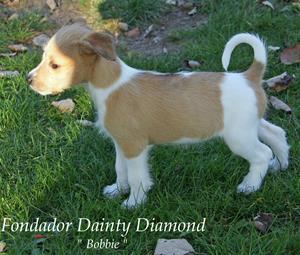 D-kullen_Bobbie–Fondador Dainty Diamond