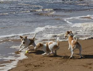 Strandlek