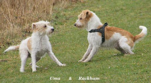 uma_och_rackham_bild