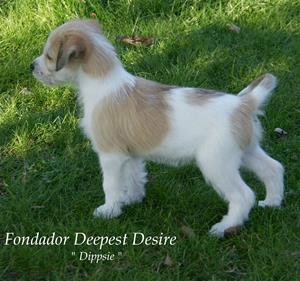 D-kullen_Dippsie–Fondador Deepest Desire