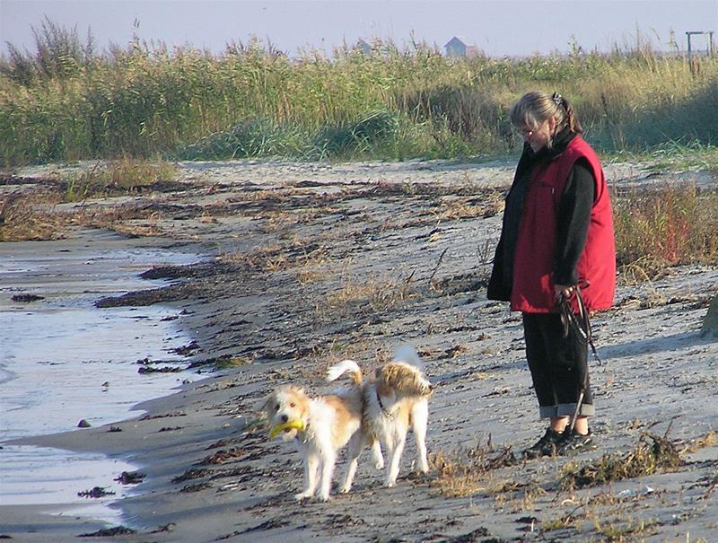 Annicca på stranden med hundarna