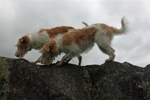 Thalia och Uma på berget
