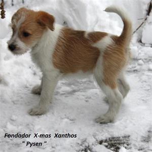 x_kullen_Pysen-Fondador X-mas Xanthos