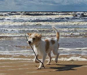 Rhea vid havet