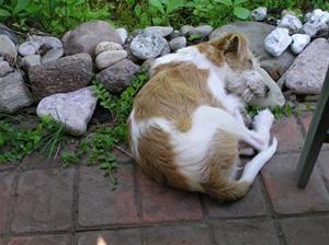 Thalia med en sten som kudde