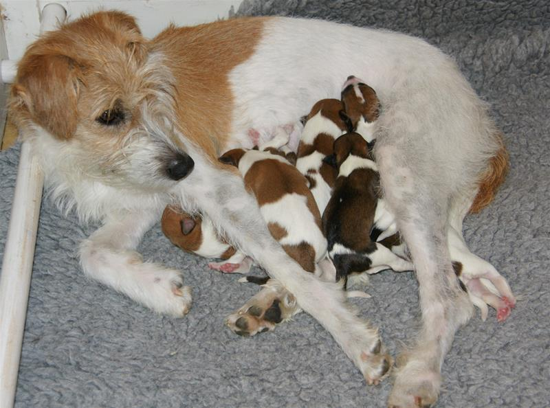 Bonnie med nyfödda valpar-21