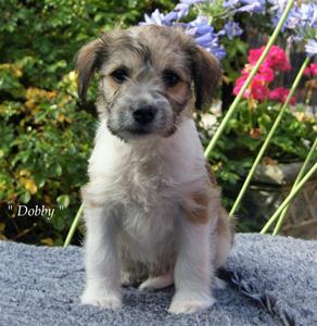 D-kullen_Dobby