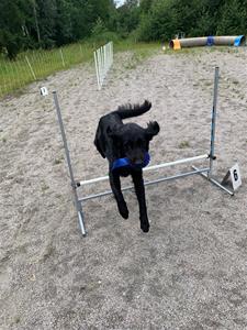 issy agility hopp